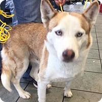 Adopt A Pet :: A410115 - San Antonio, TX
