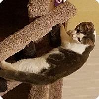 Adopt A Pet :: Isha - Berkeley Hts, NJ