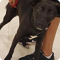 Adopt A Pet :: Annabelle Junior - Woodbridge, VA