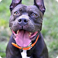 Adopt A Pet :: Blinky - Cranford, NJ