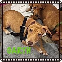 Adopt A Pet :: Doxie - Tempe, AZ