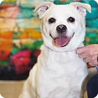 Adopt A Pet :: Tyson - Whitehall, PA