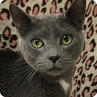 Adopt A Pet :: 1702-0213 Dapper Dan - Virginia Beach, VA
