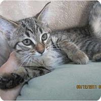 Adopt A Pet :: Sage - Sterling Hgts, MI