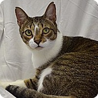 Adopt A Pet :: Romeo - Deerfield Beach, FL