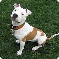 Adopt A Pet :: George - San Jose, CA