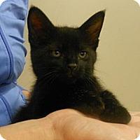 Adopt A Pet :: Skittles - Reston, VA