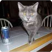 Adopt A Pet :: Cailyn - Hamburg, NY