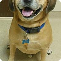 Adopt A Pet :: Rain - Gary, IN