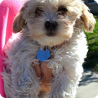 Adopt A Pet :: Opal - Simi Valley, CA