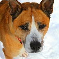 Adopt A Pet :: Temple - Fennville, MI