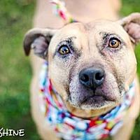 Adopt A Pet :: Sunshine - Carlsbad, CA