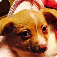 Adopt A Pet :: Bertie - Lodi, CA