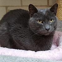 Adopt A Pet :: Quinn - Lago Vista, TX