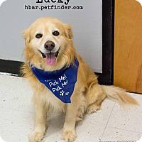 Adopt A Pet :: Lucky - Bedford, TX