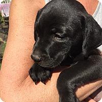 Adopt A Pet :: Hope Miller~adopted! - Glastonbury, CT
