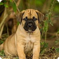 Adopt A Pet :: Ruby(Purple) - Virginia Beach, VA