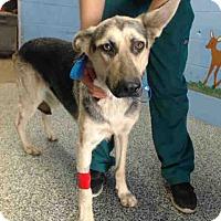 German Shepherd Dog Mix Dog for adoption in San Bernardino, California - URGENT on 10/7 SAN BERNARDINO
