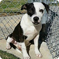 Adopt A Pet :: RITA - Texas City, TX