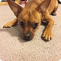 Adopt A Pet :: Brady - Worcester, MA