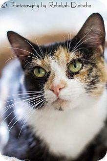 Domestic Shorthair Cat for adoption in Byron Center, Michigan - Harper