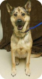 German Shepherd Dog Mix Dog for adoption in Gary, Indiana - Ginger