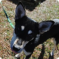 Adopt A Pet :: Ali - Richmond, VA