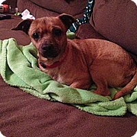 Adopt A Pet :: Bailee - Fort Valley, GA
