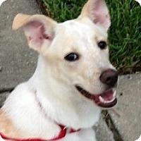 Adopt A Pet :: BBoy#3M (Jax) - Orlando, FL