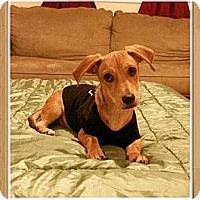 Adopt A Pet :: Plato - Encinitas, CA