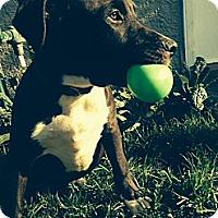 Adopt A Pet :: LUKE - Torrance, CA