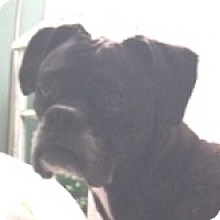 Adopt A Pet :: Athena-Adopted - Turnersville, NJ