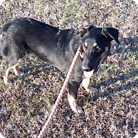 Adopt A Pet :: Sanford - Braintree, MA