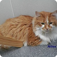 Adopt A Pet :: Niles - Dover, OH