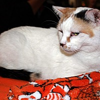Adopt A Pet :: Cinderella - Redlands, CA