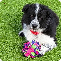 Adopt A Pet :: Sammy - Meridian, ID