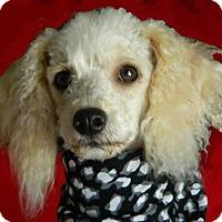 Adopt A Pet :: Joey - Tulsa, OK