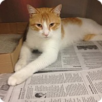 Adopt A Pet :: Ollie - East Brunswick, NJ