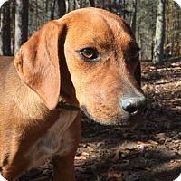 Adopt A Pet :: Ann ($400) - Harrisonburg, VA