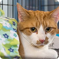 Adopt A Pet :: Mitchell - New York, NY