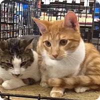 Adopt A Pet :: James and Jasper - San Antonio, TX