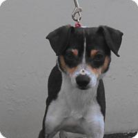 Adopt A Pet :: Telly - Huntington Beach, CA