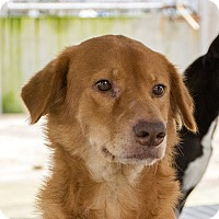 Adopt A Pet :: Dane - Long Beach, NY