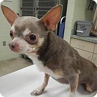 Adopt A Pet :: Tiny Timmy - Hutchinson, KS