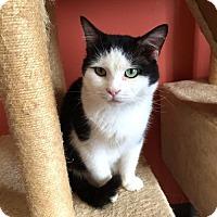Adopt A Pet :: Faust - Erwin, TN