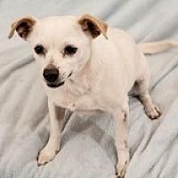 Adopt A Pet :: Vivian - Mesa, AZ