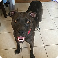 Adopt A Pet :: Suzie - Colorado Springs, CO