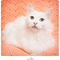Adopt A Pet :: DUTCHESS - Franklin, TN