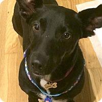 Adopt A Pet :: Jack - Morristown, NJ