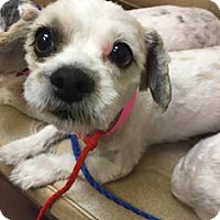 Adopt A Pet :: Kathy - Las Vegas, NV